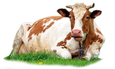 hayvancılık işletmesi